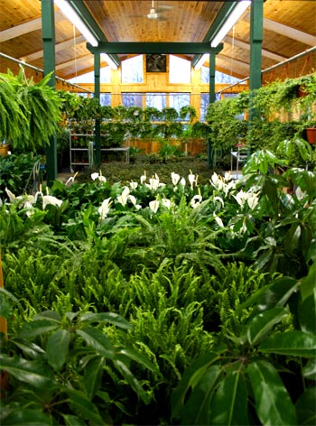 Alders Wholesale Florist - Greenhouse